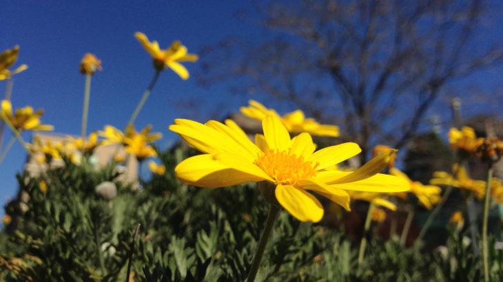 冷静の青と黄色の活動性。バランスの良い環境で、仕事や勉強の効率をアップ。