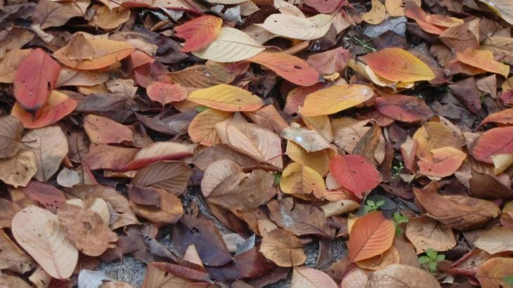 オレンジ色から赤に、そして茶色に。一枚の葉っぱの中で色の世界を表現しています。