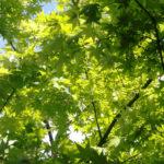 新緑を眺めて深呼吸。心と体の健康を感じ取ってください。