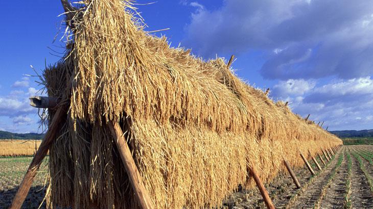 「30年目の秋の収穫」